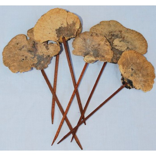 Sponge Mushroom Picked