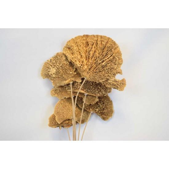 Dried Sponge Mushroom - Stemmed