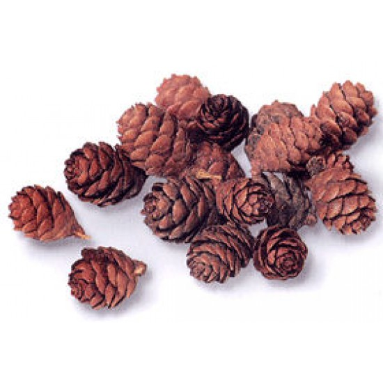 Tamarack Cones - Natural
