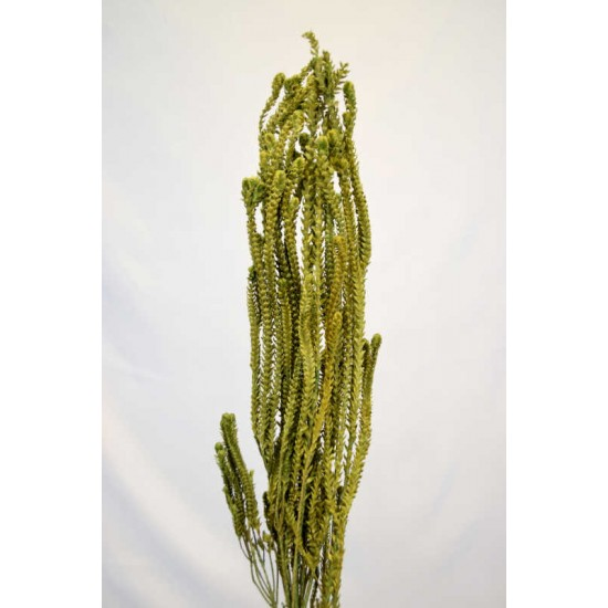 Dried African Bud Green (limited stock)