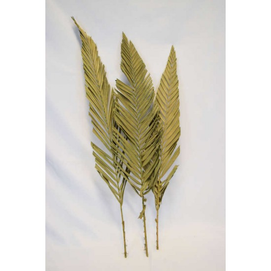 Cut Palm Frond Leaves - Natural