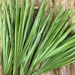 Dried Palm Leaf Bunch - Bulb Foliage