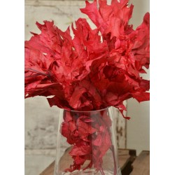 Preserved Red Oak Leaves (1 LB dried leaves)