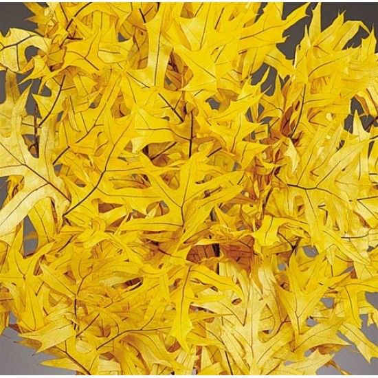 Preserved Yellow Leaves (1 LB dried leaves)