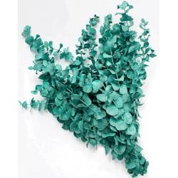 Preserved Eucalyptus - Pastel Aqua