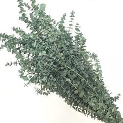 Preserved Eucalyptus - Pastel Sage