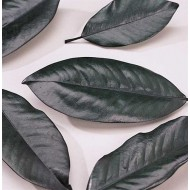 Magnolia Leaves - 200 leaf Bulk Box