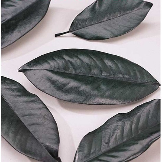 Magnolia Leaves - Bulk Box
