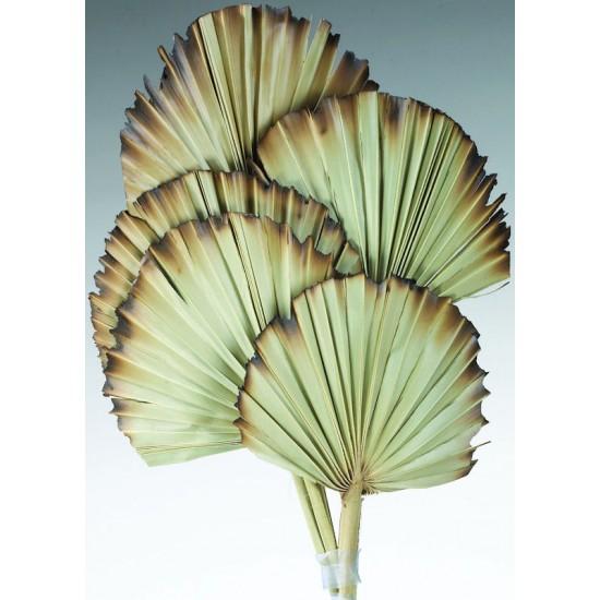 Burnt Sun Palm Fans