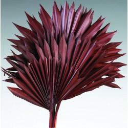 Dried Sun Palm Leaf Fans