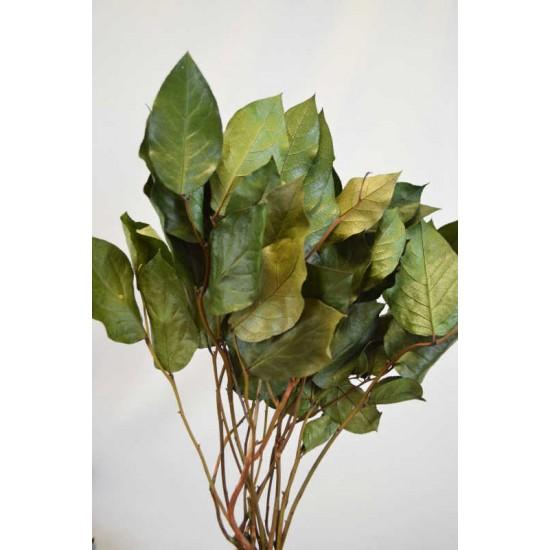 Preserved Lemon Leaf (Salal)