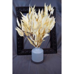 Preserved Willow Eucalyptus Bunch - Bleached White