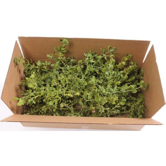 Fresh Mistletoe Boughs Bulk