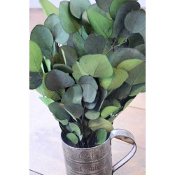 Preserved Populus Eucalyptus Bunch - Green