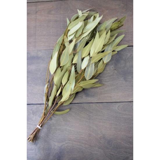Natural Willow Eucalyptus - Light Green