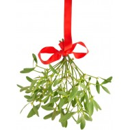 Dried Mistletoe Boughs