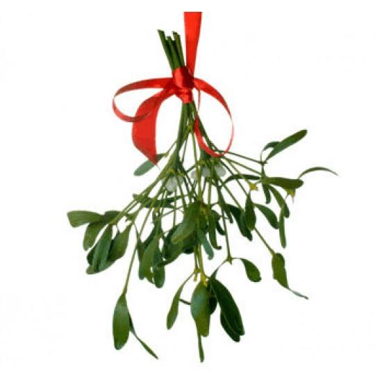 Dried Mistletoe Boughs