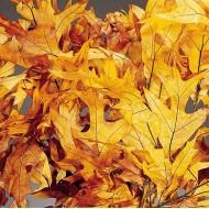 Preserved Browntone Oak Leaves Case