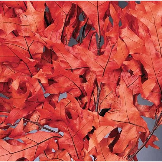 Preserved Persimmon Oak Leaves Case