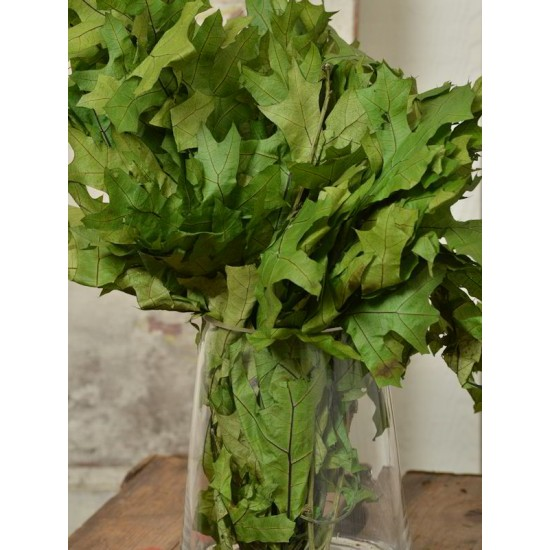 Preserved Spring Green Oak Leaves (1 LB dried leaves)
