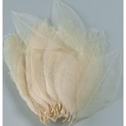 Skeleton Leaves - Bleached Magnolia