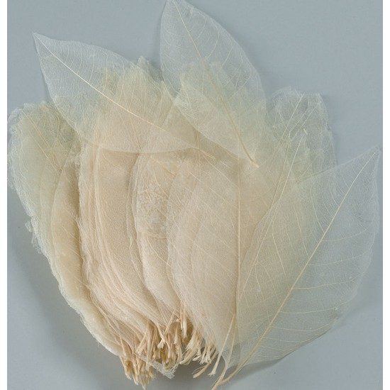 Skeleton Leaves - Bleached Magnolia