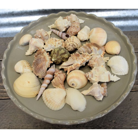 Assorted Decorative Sea Shells - 2 Bags Large