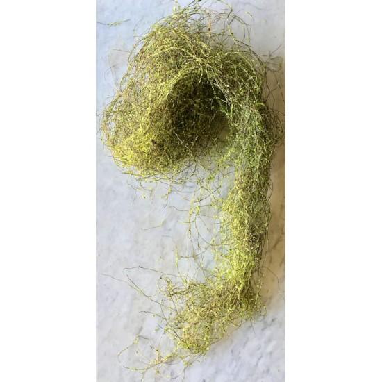 Angel Vine - Aloe Green