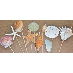 Dried Sea Life Stemmed