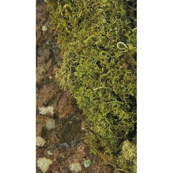 Dried Sheet Moss - Natural Bulk Box