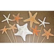 Dried Starfish Stemmed