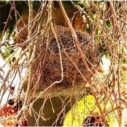 Dried Bird Nests - Natural Handmade Nests