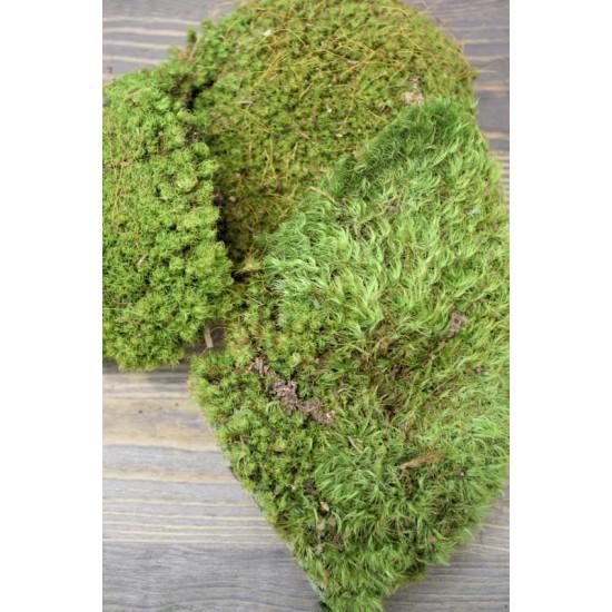 Mood Moss - Natural