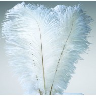 Ostrich Feathers - Wing Plumes