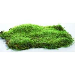 Dried Sheet Moss - Preserved Bulk Box