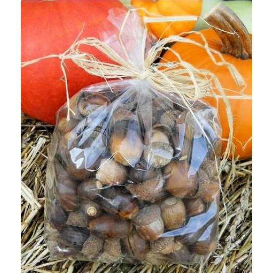 Acorn Nuts For Sale - No Caps