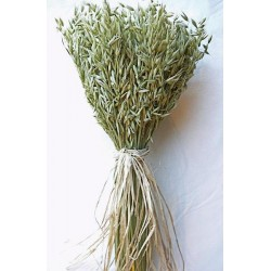 Avena Green Oats Centerpiece Stack