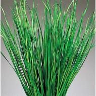 Bayou Grass - Dried Green or Natural