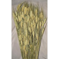 Club Wheat Bundle