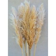 Dried Pampas Grass - Natural Pampas Grass