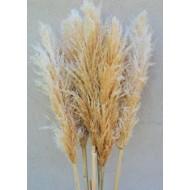 Dried Pampas Grass - Natural Pampas Grass
