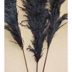Dried Pampas Grass - Black Color