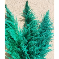 Dried Pampas Grass - Green Color
