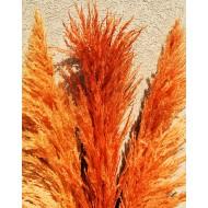 Dried Pampas Grass - Orange Color