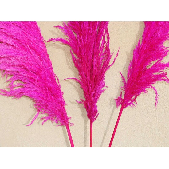 Dried Pampas Grass - Pink Color