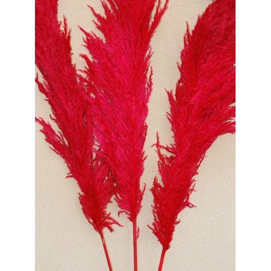 Dried Pampas Grass - Red Color