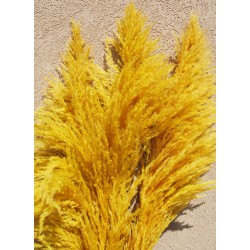 Dried Pampas Grass - Yellow Color