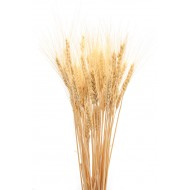 Dried Wheat Bunch - 8 oz blond