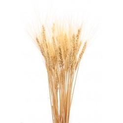 Dried Wheat Bunch - 8 oz blond