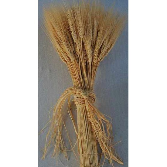 Bulk Case of Wheat Stalks - 15 lb case